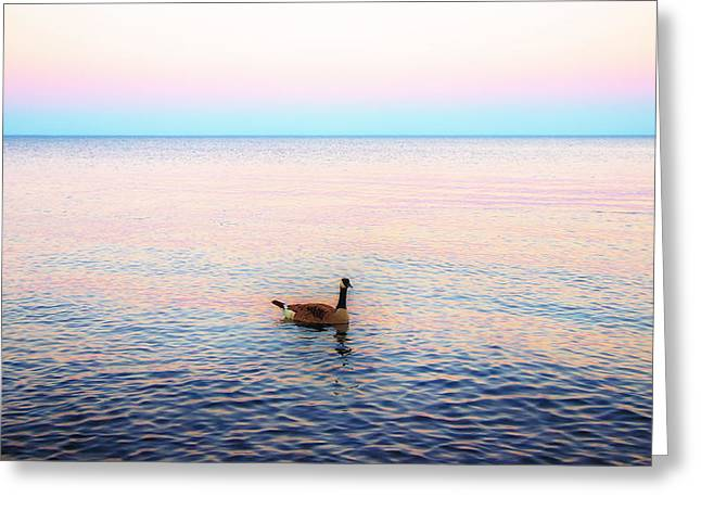 Geese Greeting Cards - Sunset Goose Greeting Card by Bill Tiepelman