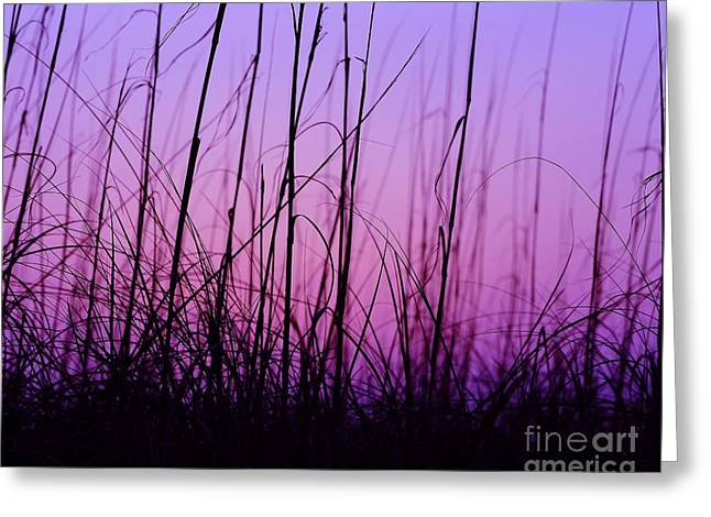 Al Powell Photography Usa Greeting Cards - Sunset Grasses Greeting Card by Al Powell Photography USA