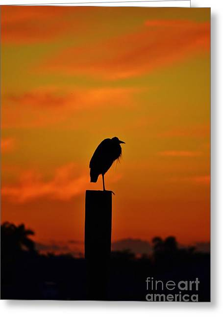 St. Lucie River Greeting Cards - Sunset Heron Greeting Card by Lynda Dawson-Youngclaus