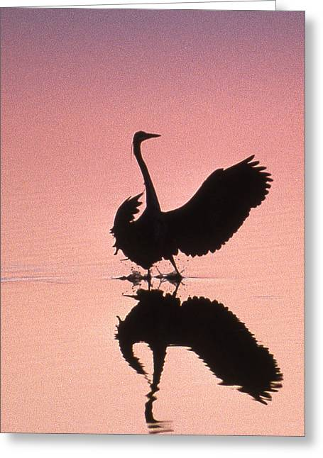 Photos Of Birds Greeting Cards - Sunset Heron Greeting Card by Skip Willits