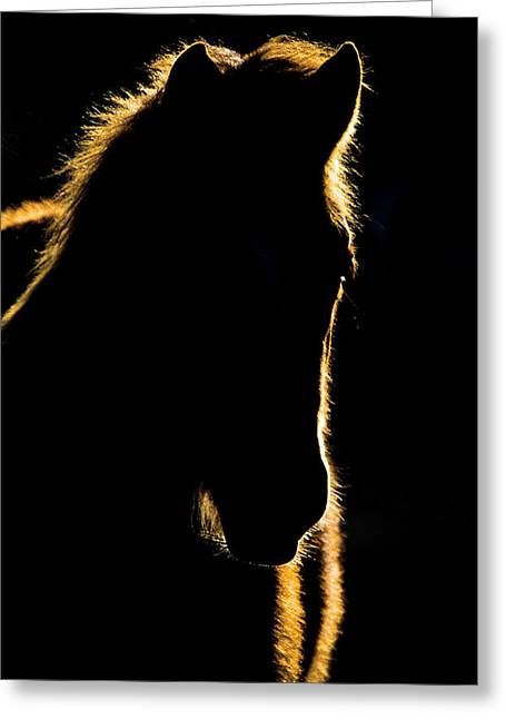 Sunset Horse Silhouette Canada Greeting Card by Mark Duffy