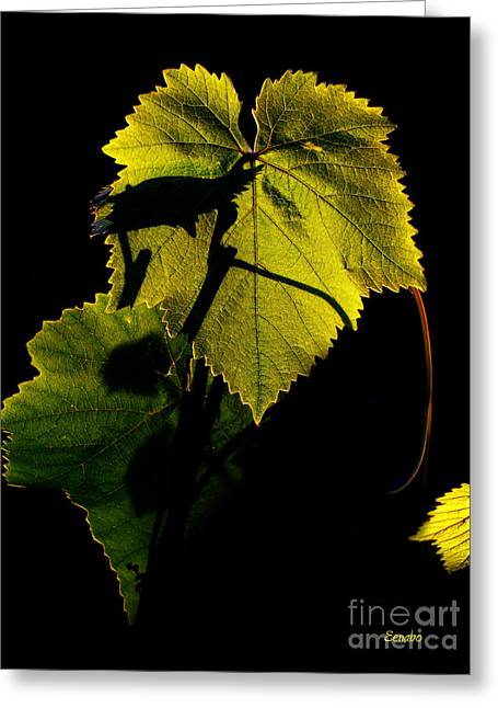 Vine Leaves Photographs Greeting Cards - Sunset in My Garden Greeting Card by Eena Bo