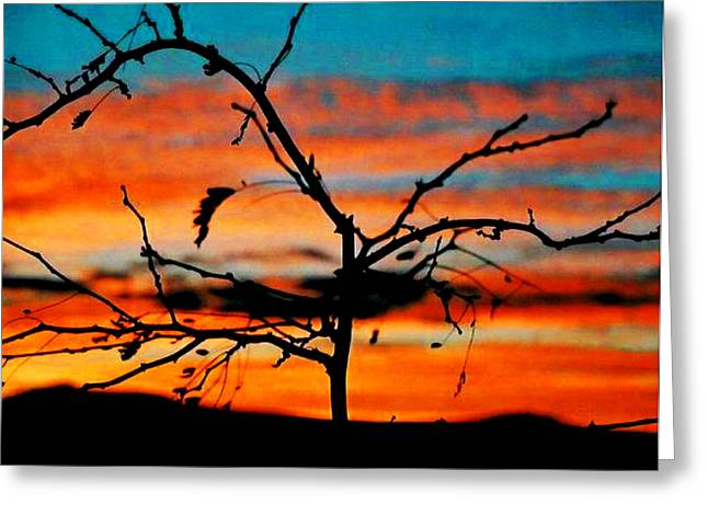 Sunset In Nevada Greeting Card by Stephani JeauxDeVine
