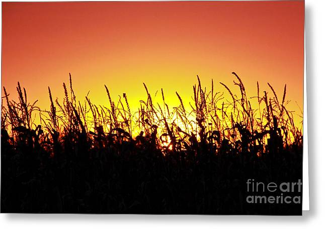 Jill Hyland Greeting Cards - Sunset on the Farm Greeting Card by Jill Hyland