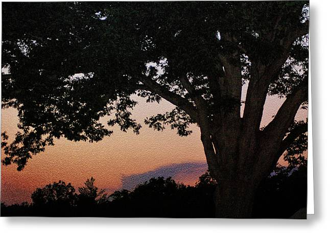 Devils Den Greeting Cards - Sunset over a witness tree Greeting Card by Dave Sandt