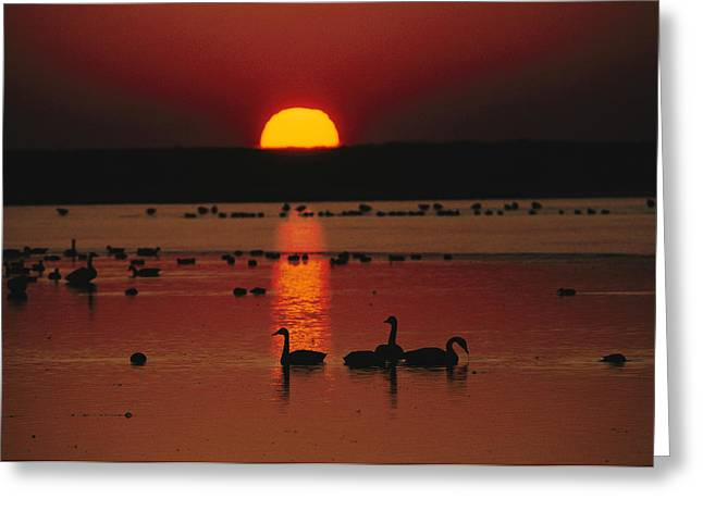 Geese Silhouette Greeting Cards - Sunset Over Chincoteague Island Marsh Greeting Card by Medford Taylor