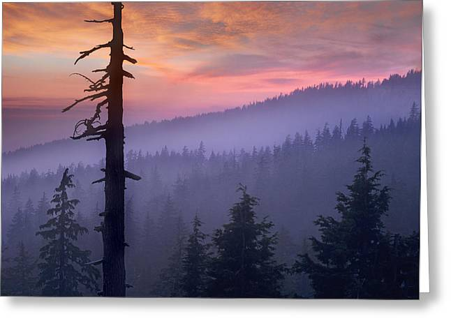 Crater Lake Sunset Greeting Cards - Sunset Over Forest Crater Lake National Greeting Card by Tim Fitzharris