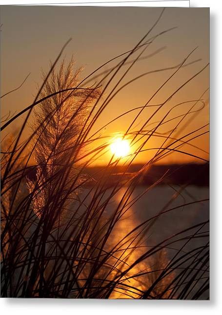 Pampas Grass Greeting Cards - Sunset over Lake Wylie SC Greeting Card by Dustin K Ryan