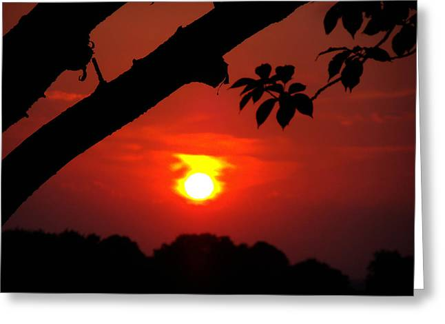 Sunset Over The Golf Course Greeting Card by Kimberly Perry