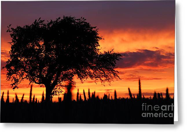 Clare Scott Greeting Cards - Sunset over the Meadows Greeting Card by Clare Scott