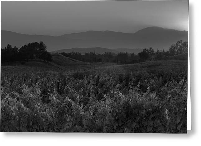 Vineyard Landscape Greeting Cards - Sunset over the Vineyard Black and White Greeting Card by Peter Tellone