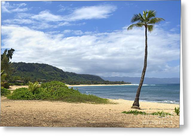 North Shore Greeting Cards - Sunset Point Palm Tree Greeting Card by Paul Topp