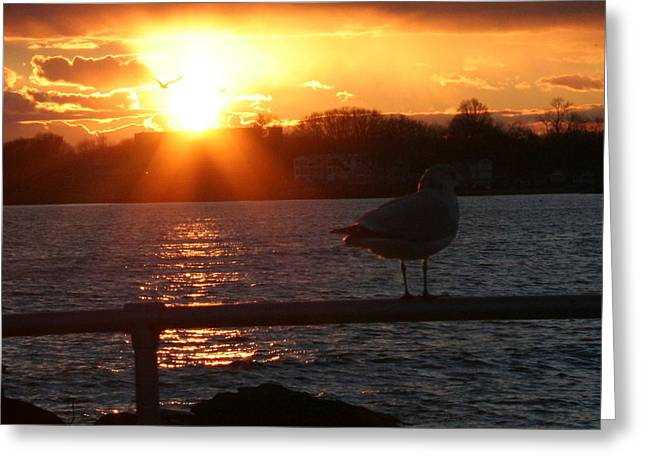 Stephen Melcher Greeting Cards - Sunset Seagull Greeting Card by Stephen Melcher