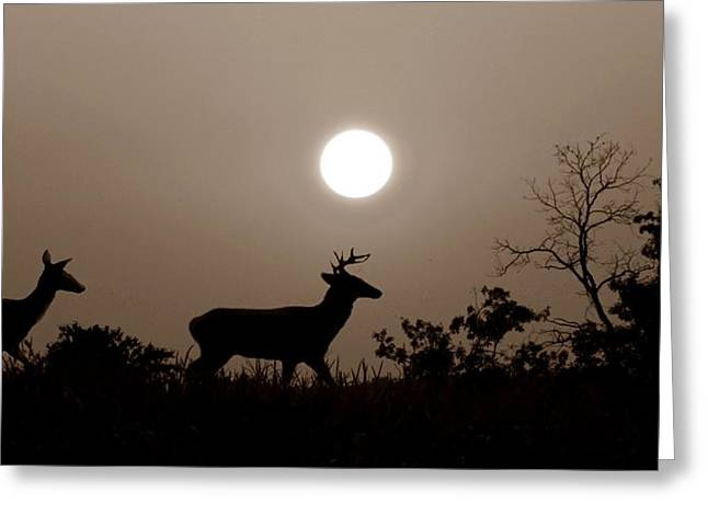 Hunting Cabin Photographs Greeting Cards - Sunset Silhouette S Greeting Card by David Dehner