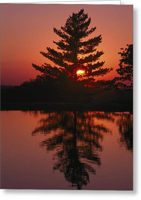Ozark Mountains Greeting Cards - Sunset Silhouettes A Tree Greeting Card by Richard Nowitz