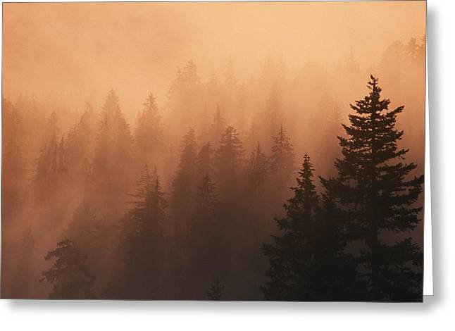 Moist Greeting Cards - Sunset Through Dense Fog, Pine Tree Greeting Card by Natural Selection Craig Tuttle