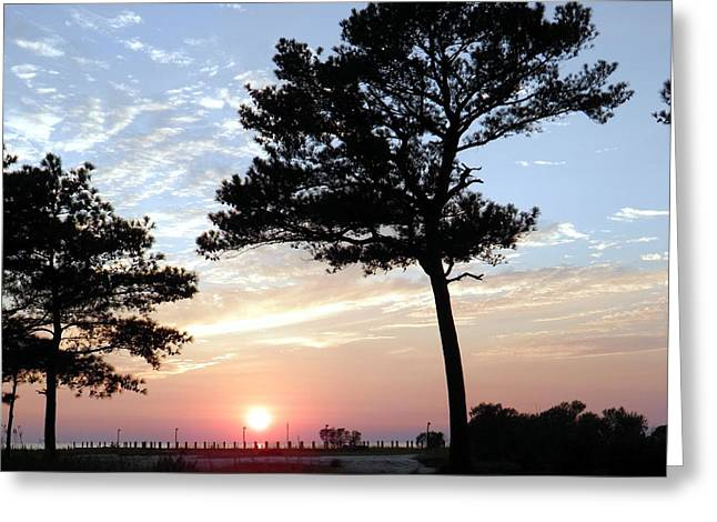 Gnarly Greeting Cards - Sunset Through The Trees Cape Charles VA Greeting Card by Sven Migot