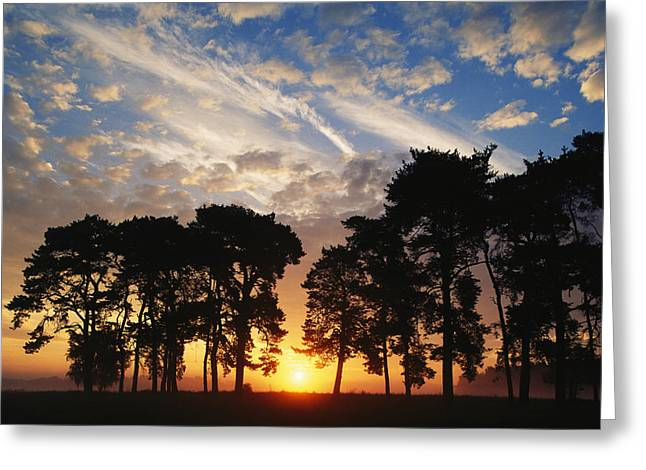 Park Scene Greeting Cards - Sunset View With Silhouetted Trees Greeting Card by Norbert Rosing