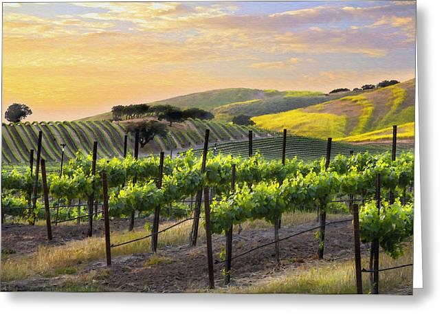 Grape Vineyard Greeting Cards - Sunset Vineyard Greeting Card by Sharon Foster
