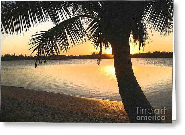 Palm Tree Greeting Cards - Sunset with Palm Tree Greeting Card by Judee Stalmack