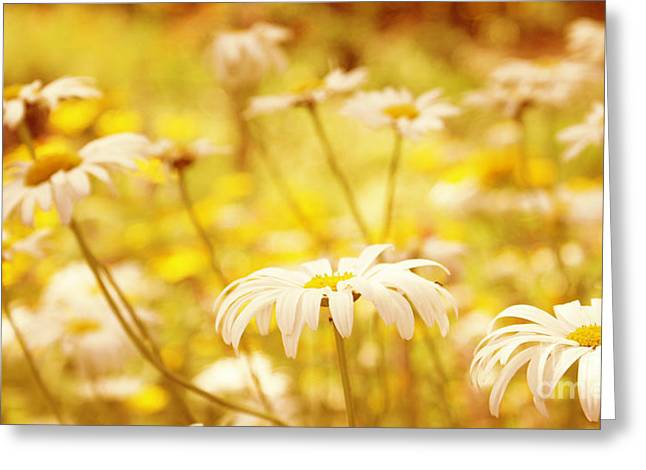 Aimelle Photography Greeting Cards - Sunshine Greeting Card by Aimelle