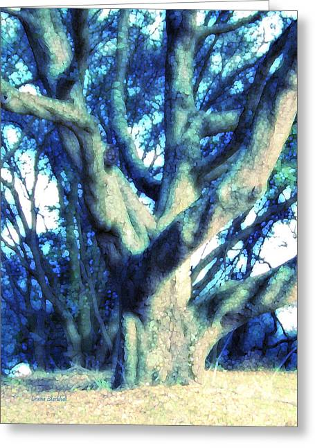 Tree Limbs Greeting Cards - Sunshine And Shadows Greeting Card by Donna Blackhall