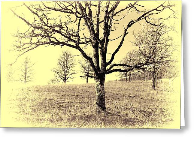 Bare Trees Greeting Cards - Sunshine Greeting Card by Bonnie Bruno