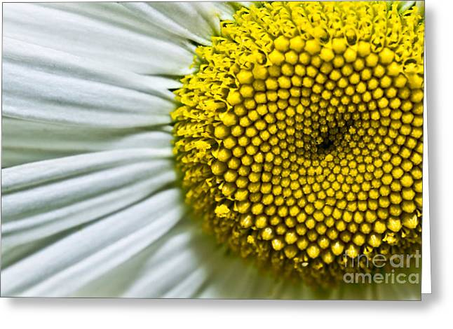 Bellis Greeting Cards - Sunshine Daisy Greeting Card by Ryan Kelly