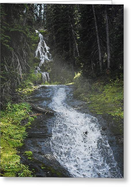 Arlyn Petrie Greeting Cards - Sunshine Falls Greeting Card by Arlyn Petrie