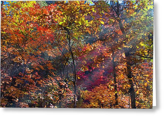West Fork Greeting Cards - Sunshine in the Trees Greeting Card by Brian Lambert