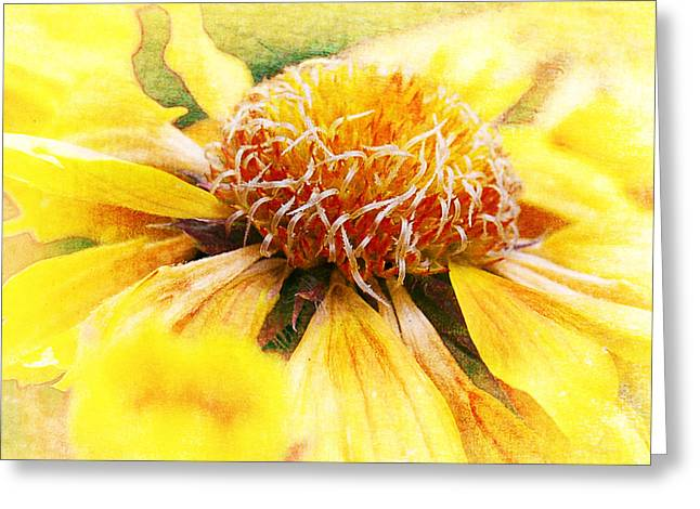 Recently Sold -  - Yellow Sunflower Greeting Cards - Sunshine Greeting Card by Jeff Burgess