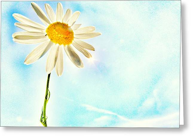 Daisy Greeting Cards - Sunshine Greeting Card by Marianna Mills
