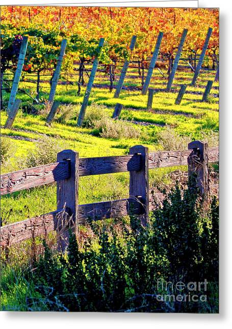 Sunshine On Fall Vineyard - Digital Painting Greeting Card by Carol Groenen