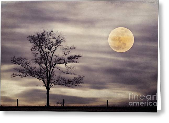 Solitaire Greeting Cards - Super Moon Greeting Card by Darren Fisher