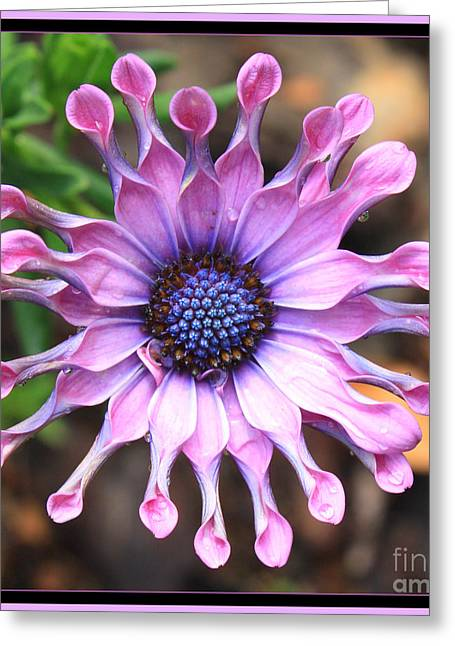 Pink And Purple Flowers Greeting Cards - Superstar Greeting Card by Carol Groenen