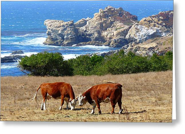 Surf and Turf Two Greeting Card by Jeff Lowe