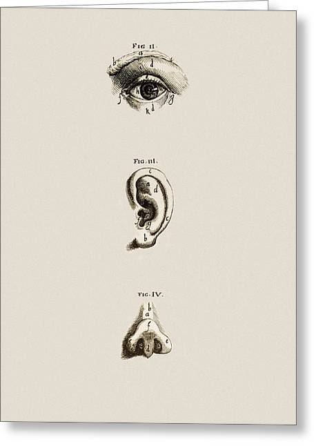 Historical Images Greeting Cards - Surface Anatomy Of The Eye, Ear And Nose Greeting Card by Mehau Kulyk
