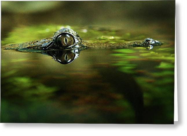 Surface Tension Greeting Card by Tim Nichols