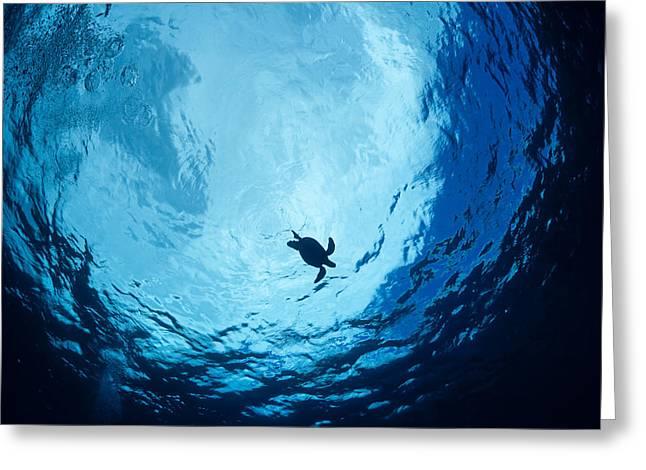 Niihau Hawaii Greeting Cards - Surfacing Sea Turtle Greeting Card by Dave Fleetham - Printscapes