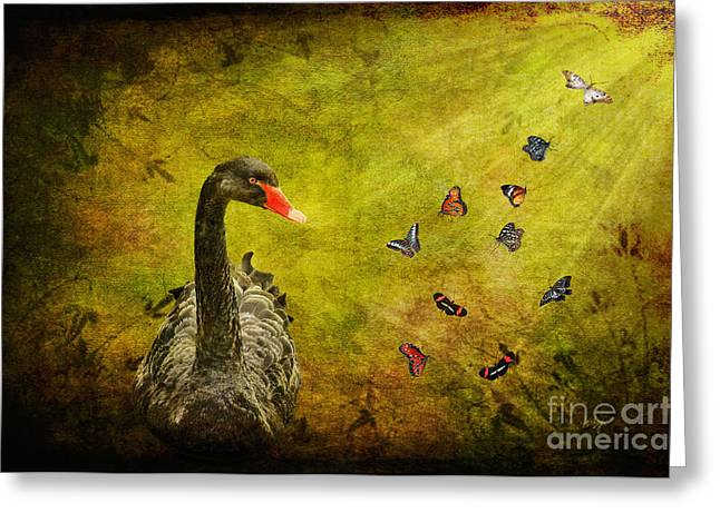 Black Swans Greeting Cards - Surprises Greeting Card by Lois Bryan