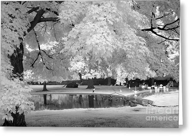 Surreal Infrared Dreamy Landscape Greeting Cards - Surreal Dreamy Black White Flamingo Pond  Greeting Card by Kathy Fornal