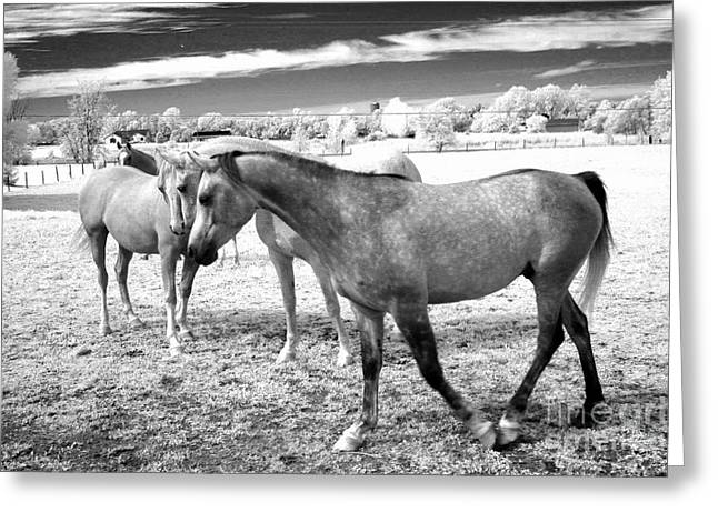 Pasture Framed Prints Greeting Cards - Surreal Infrared Black White Horses Landscape Greeting Card by Kathy Fornal