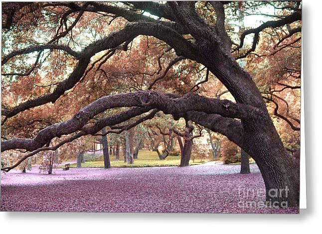 Surreal Dreamy Nature Photos Greeting Cards - Surreal Old Oak Tree South Carolina Fall Colors Greeting Card by Kathy Fornal