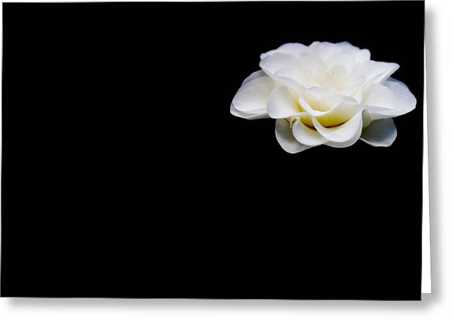 Floating Flowers Greeting Cards - Suspended Greeting Card by Rebecca Cozart