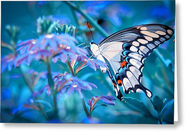 Swallow Tail Greeting Cards - Swallow Tail Butterfly Greeting Card by Linda Pulvermacher