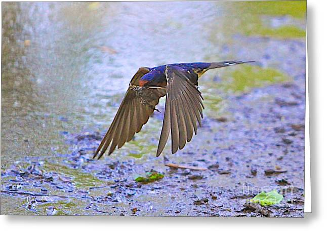 Great Birds Mixed Media Greeting Cards - Swallow Tail Greeting Card by Robert Pearson