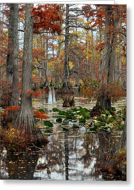 Swamp In Fall Greeting Card by Marty Koch