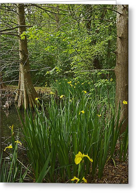 Cheri Randolph Greeting Cards - Swamp Iris Greeting Card by Cheri Randolph