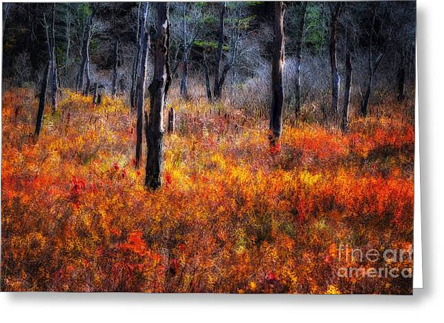 Connecticut Landscapes Greeting Cards - Swamp Music - A Late Autumn Impressionist scenic Greeting Card by Thomas Schoeller