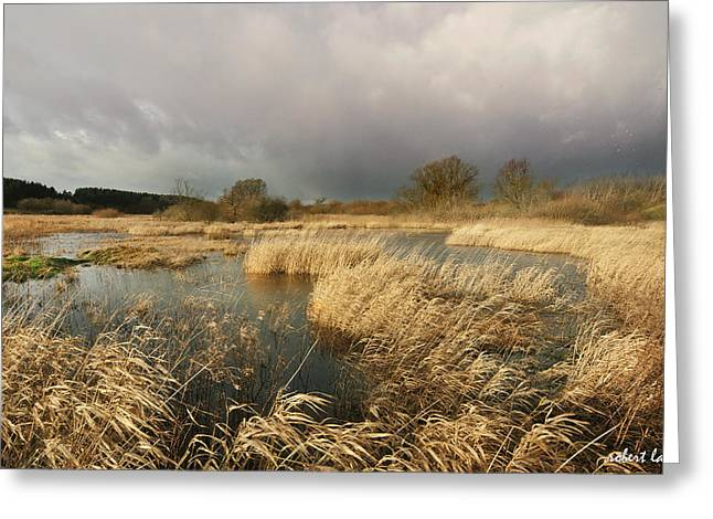 Swampland Greeting Cards - Swampland Greeting Card by Robert Lacy